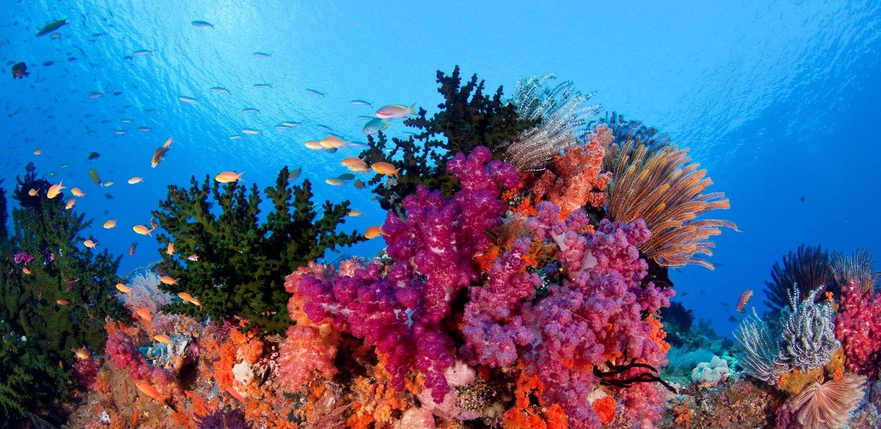 Los Corales Del Fondo Del Mar