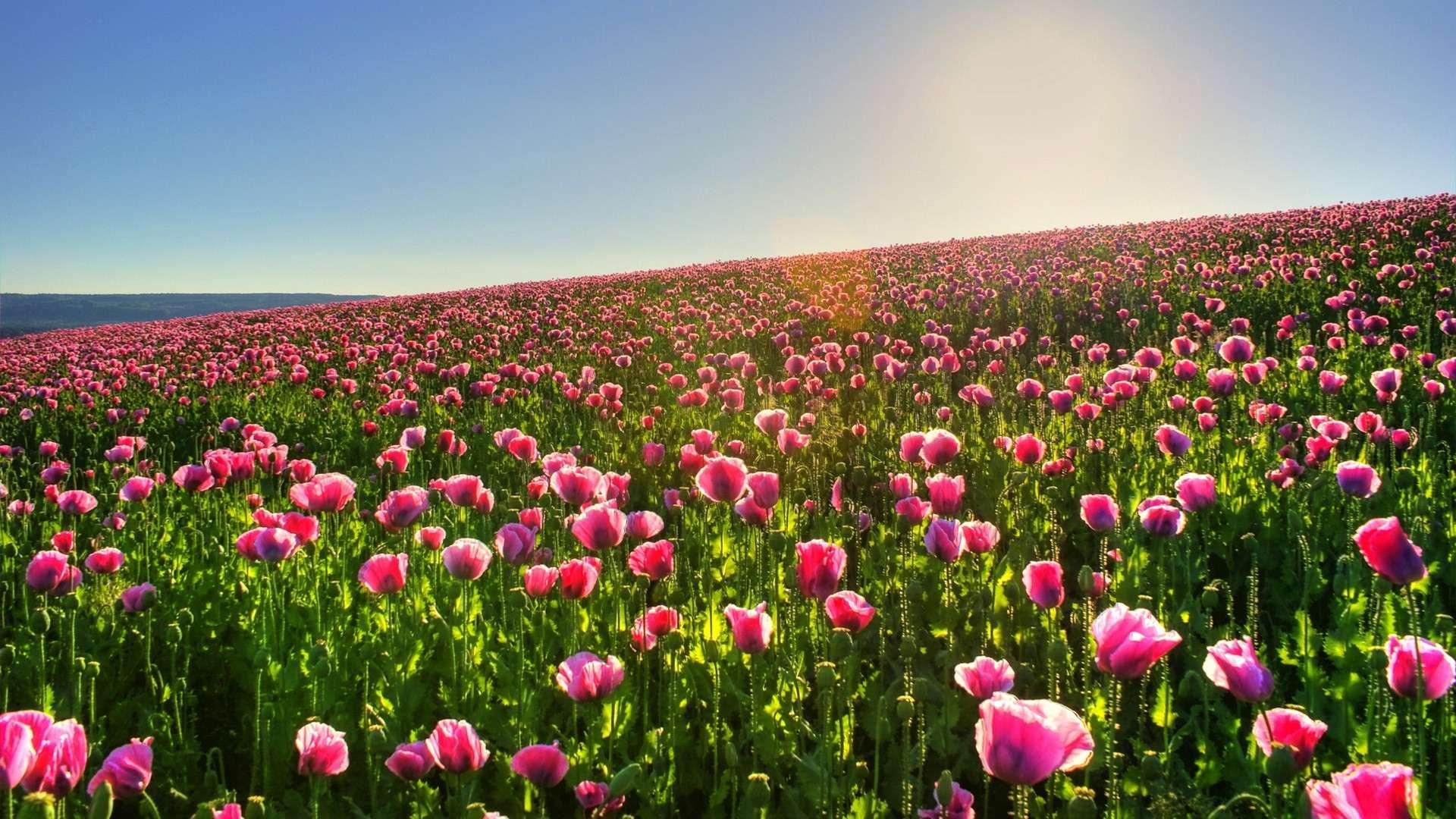 La Esencia De La Primavera